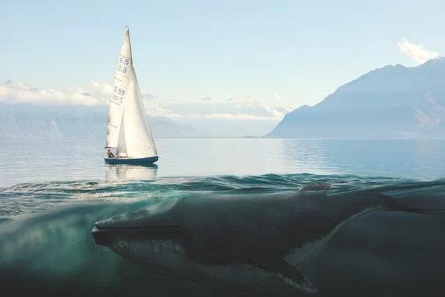 الحوت الأزرق أكبر الحيوانات على وجه الأرض حقائق مدهشة عن الحوت الأزرق بوابة الأسرار In 2020 Sailing Photography Sailing Day Sailing Adventures