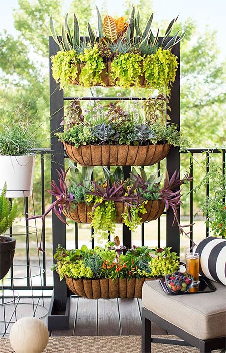 A diy vertical garden brings privacy and produce to a for Terrace plants