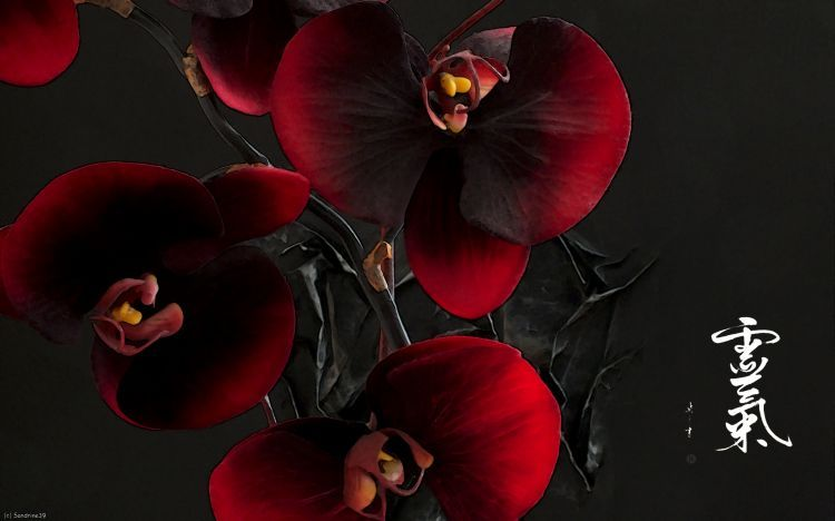 fonds d'écran art - numérique nature - fleurs orchidées pourpre
