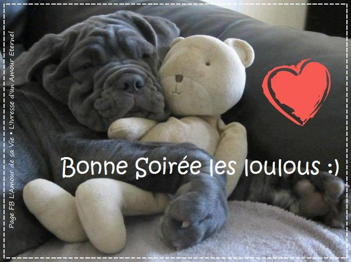 bonne soir e les loulous bonnesoiree chien peluche canape calin mignon marrant repos sommeil. Black Bedroom Furniture Sets. Home Design Ideas