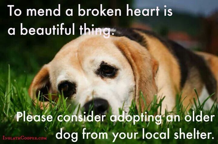 Pin by Misty James on Pets | Animals, Dogs, Animal welfare