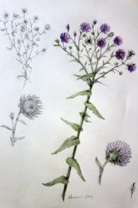 "Article in the Times Beacon Record Newspapers about our February Art Exhibit - ""Native Plants of Long Island in Colored Pencil"" by Diane Boucher, Stony Brook resident & founder of the American Society of Botanical Artists.  http://tbrnewsmedia.com/stony-brook-artist-shares-love-native-plants-emma-s-clark-library/"