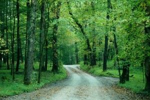 Hyatt Lane and Sparks Lane - These 2 lanes cut through the center of the open fields at Cades Cove.