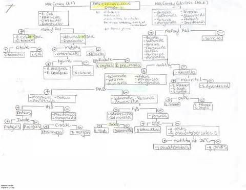 Flow Chart Microbiology Unknown My Favorite Flow Chart So Far