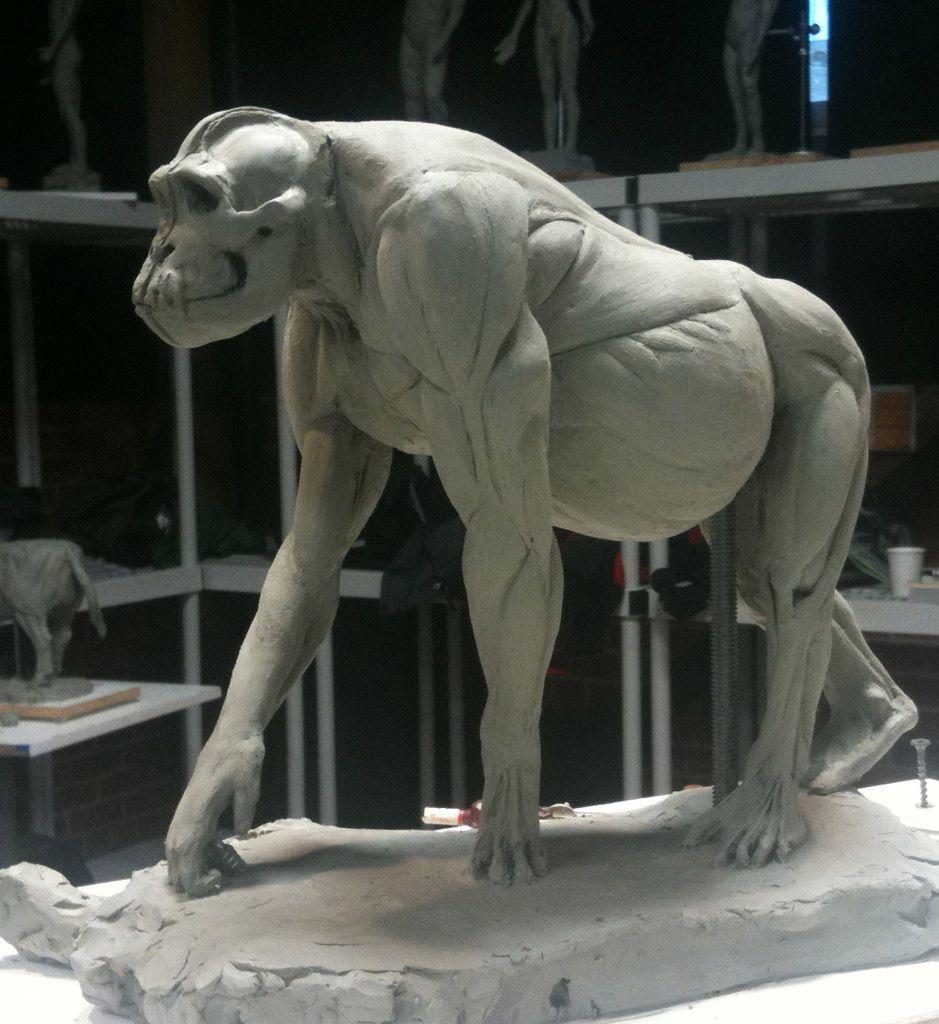 gorilla hand anatomy - Google Search | ref animals | Pinterest ...