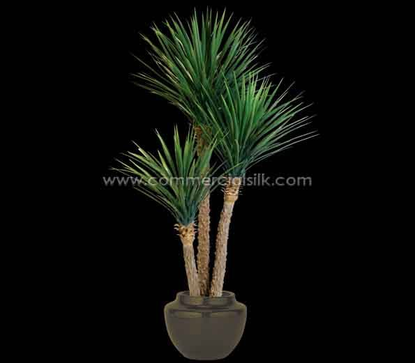 For A Complete Desert Landscape Theme Incorporate This Yucca With Other Succulents