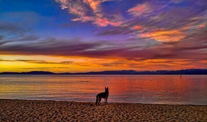 Dog Silhouette At Sunset Lake Tahoe Vacation Lake Tahoe Vacation Rentals South Lake Tahoe