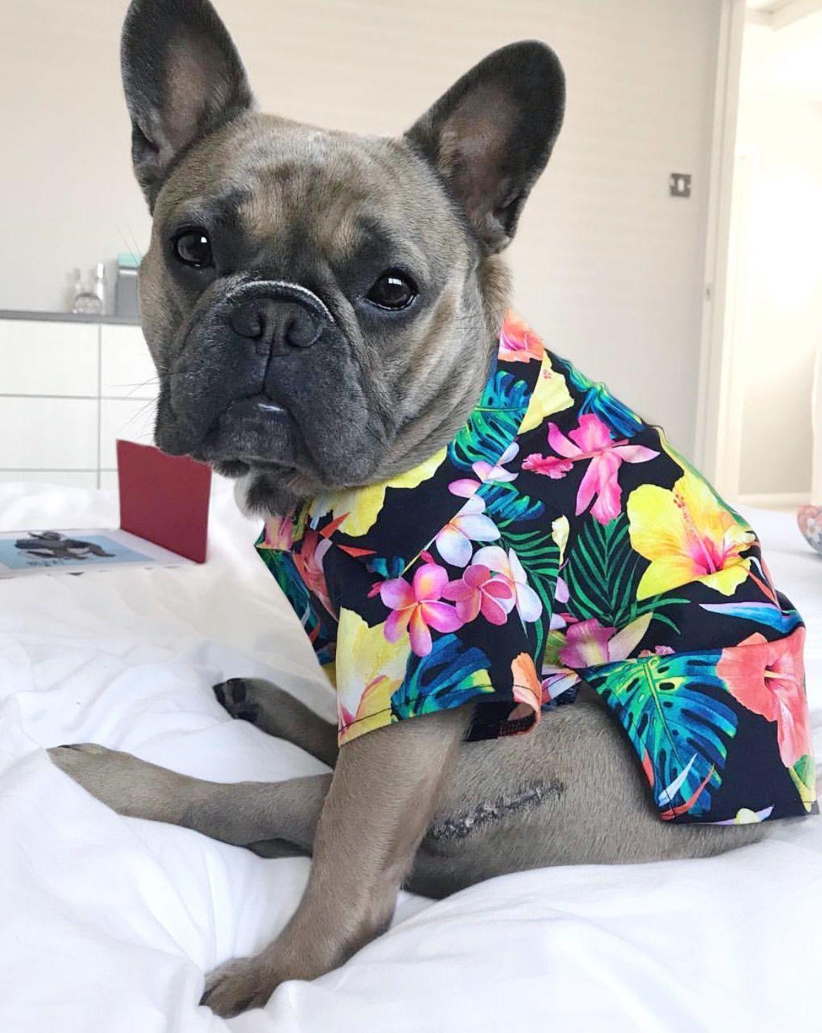 6c9b2a73b2b20 Dogs in clothes. Modern dog. Hawaiian dog shirt. Fashion for dogs by ...