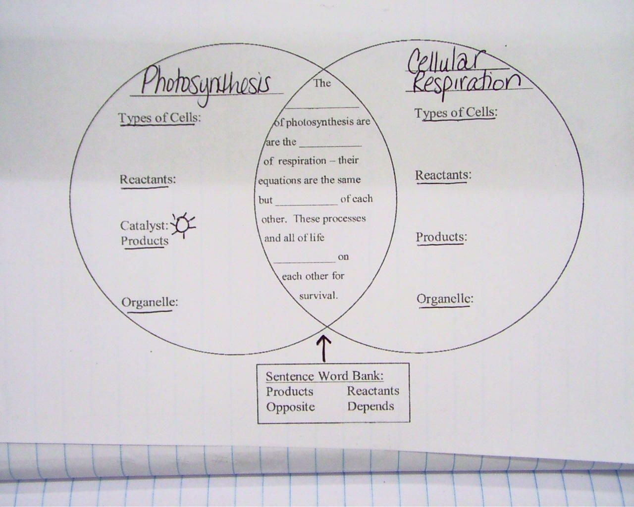 Cellular Respiration Diagram Worksheet 100101 Cellular