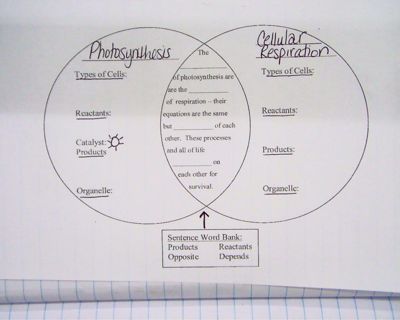 Cellular Respiration Diagram Worksheet   100,101 Cellular ...