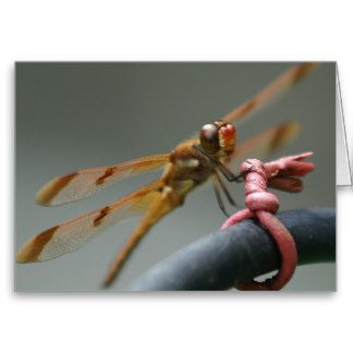 Painted Skimmer Greeting Card. Greeting Card