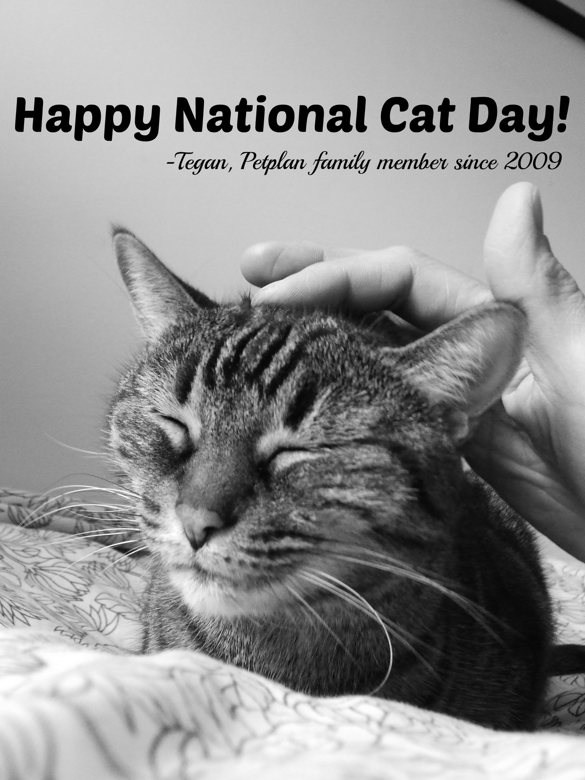 October 29 Is National Cat Day When It Comes To Unconditional Love Our Cats Are Well The Cat S Meow Doesn T Love Like National Cat Day Cat Insurance Cats