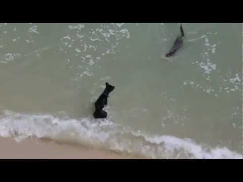 Otter and dog make cute friends - YouTube