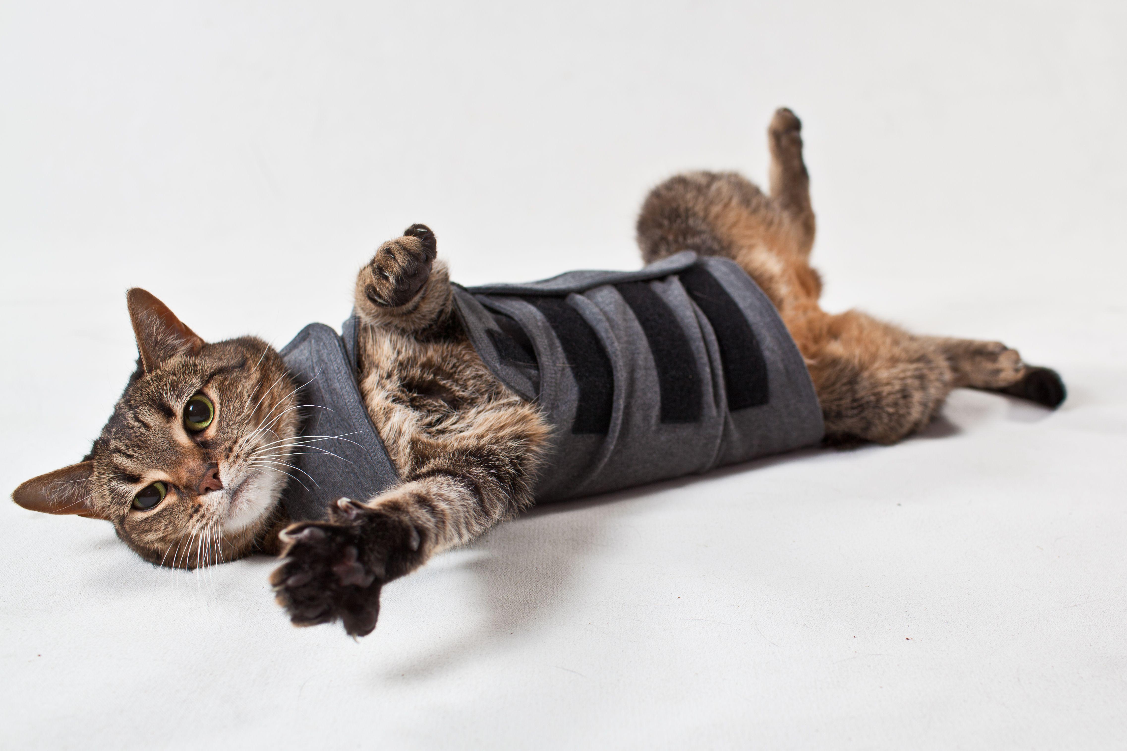 Pin on Thundershirt for Cats
