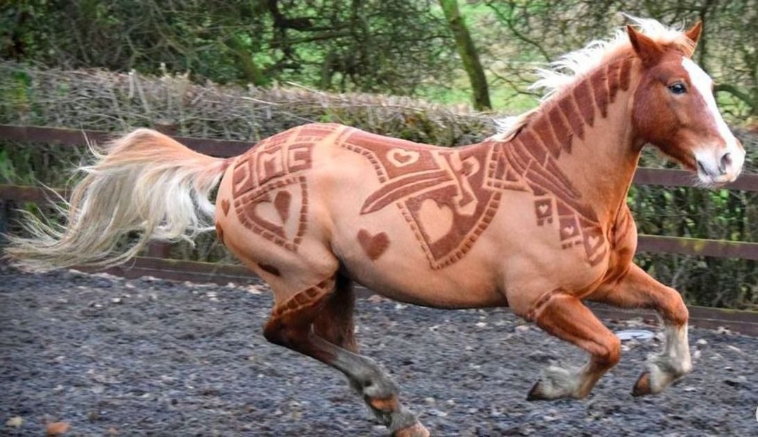 Horses Become Hairy Works of Art Thanks to One Creative Clipper | Mashable