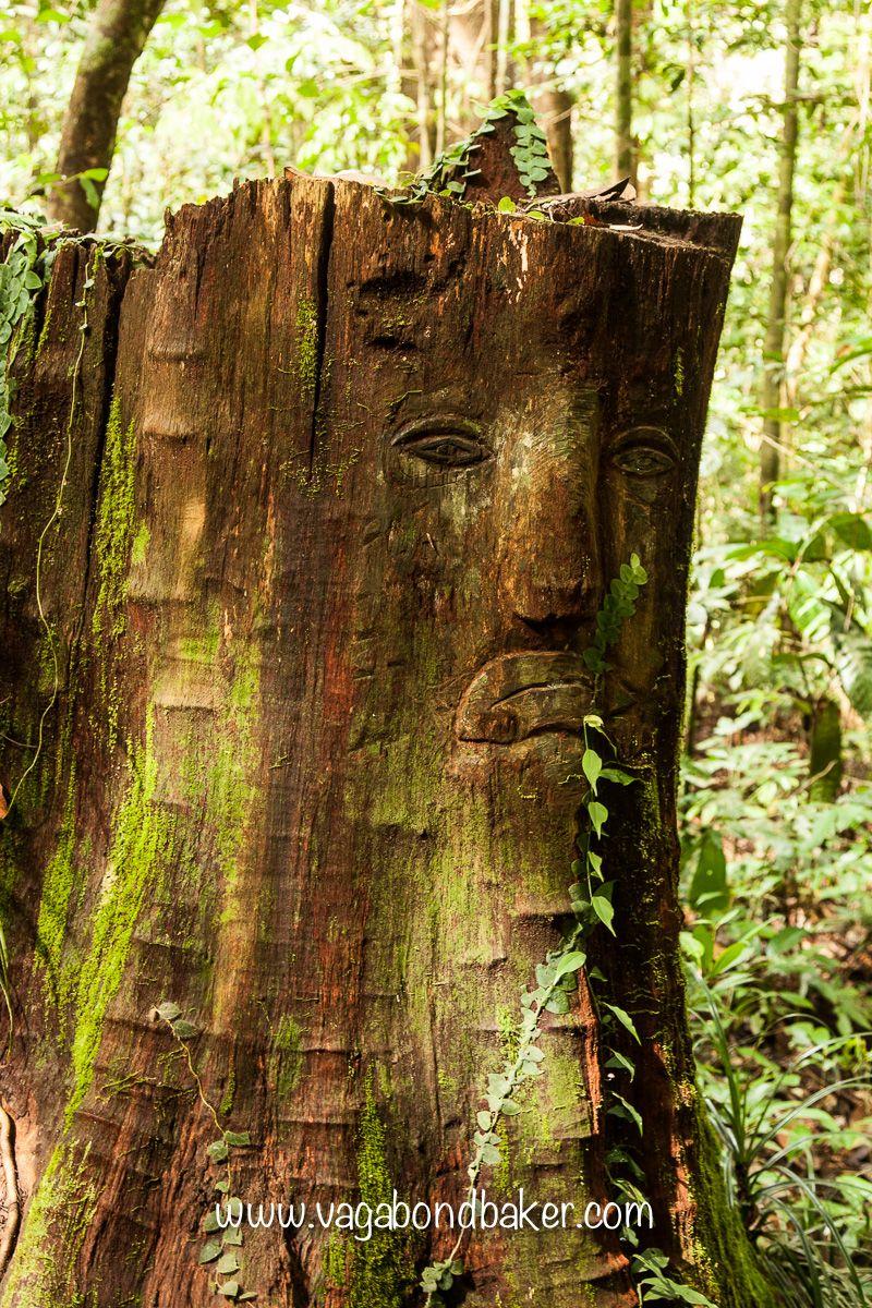 Kuching Buddha S Birthday And Kubah National Park National Parks Nature Photography