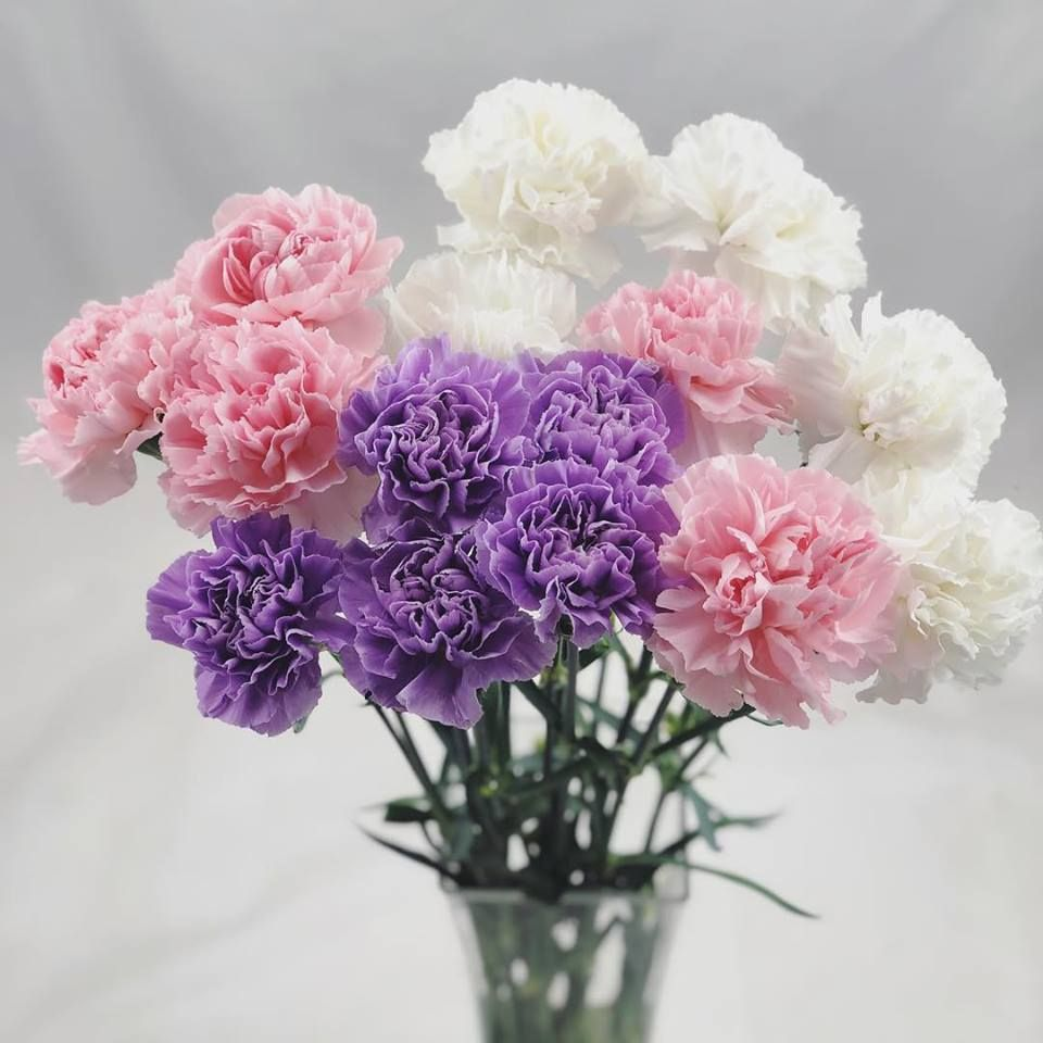 We Think Carnations Get A Bit Of A Bad Rep And Undeservedly So In Our Opinion They Re So Long Lasting Have So Many Petals Flower Delivery Carnations Flowers