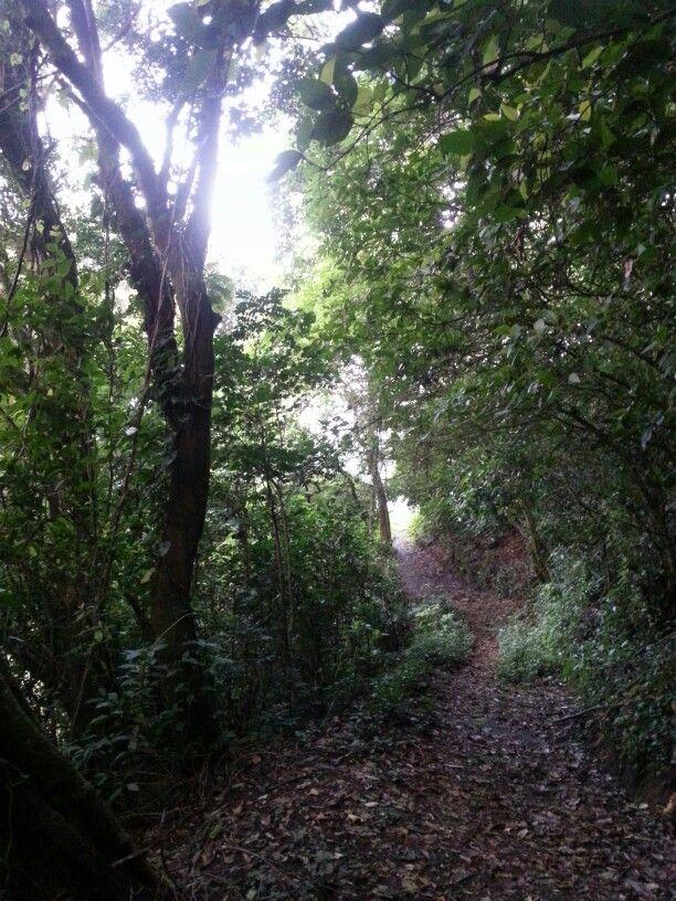 Apaneca Ahuachapan El Salvador Centro America Country Roads Places Tree