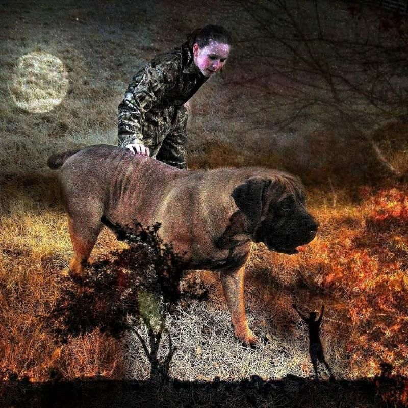 Allen S Virginia Boerboels Known To Be The Best Family And Guard