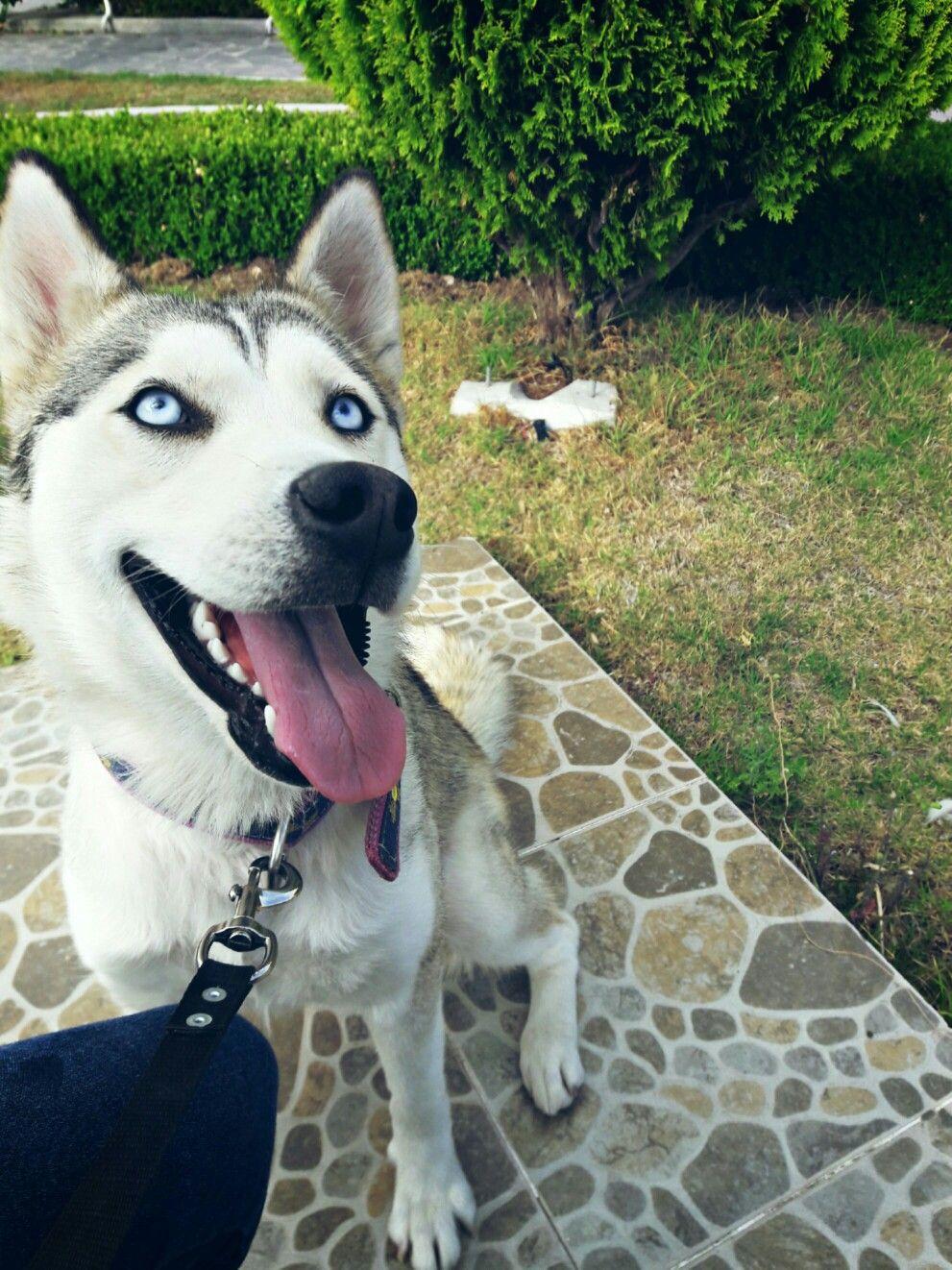 Mi Pequeña🎀 Husky, Dogs, Animals