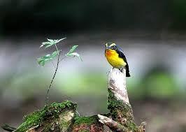 「鳥画像」の画像検索結果