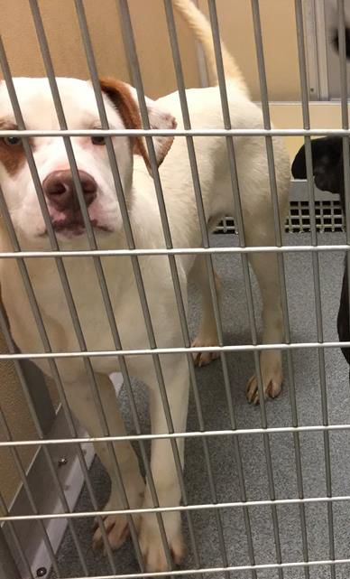 33672 Located In Los Lunas Nm Has 7 Days Left To Live Adopt Him Now Shelter Dogs Dogs