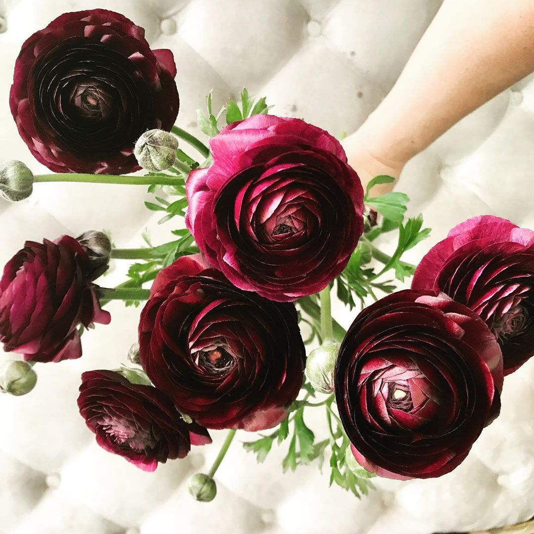 The Most Beautiful Burgundy Ranunculus Beautiful Bouquet Of Flowers Best Flower Delivery Flower Delivery Uk
