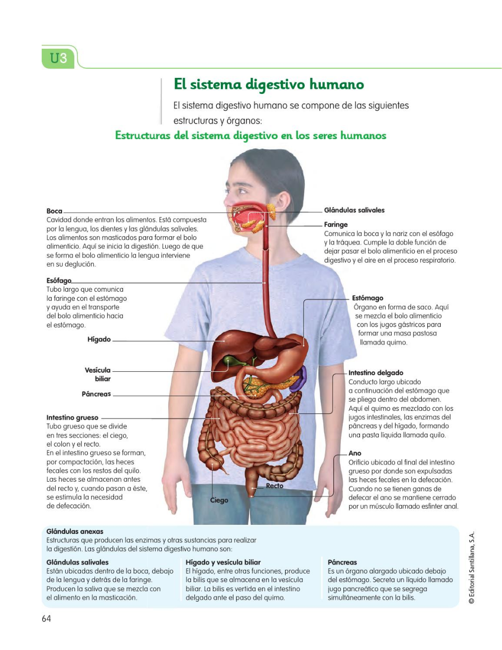 Aparato Digestivo Buscar Con Google Sistema Digestivo Humano Funciones De Nutricion Anatomia Y Fisiologia Humana