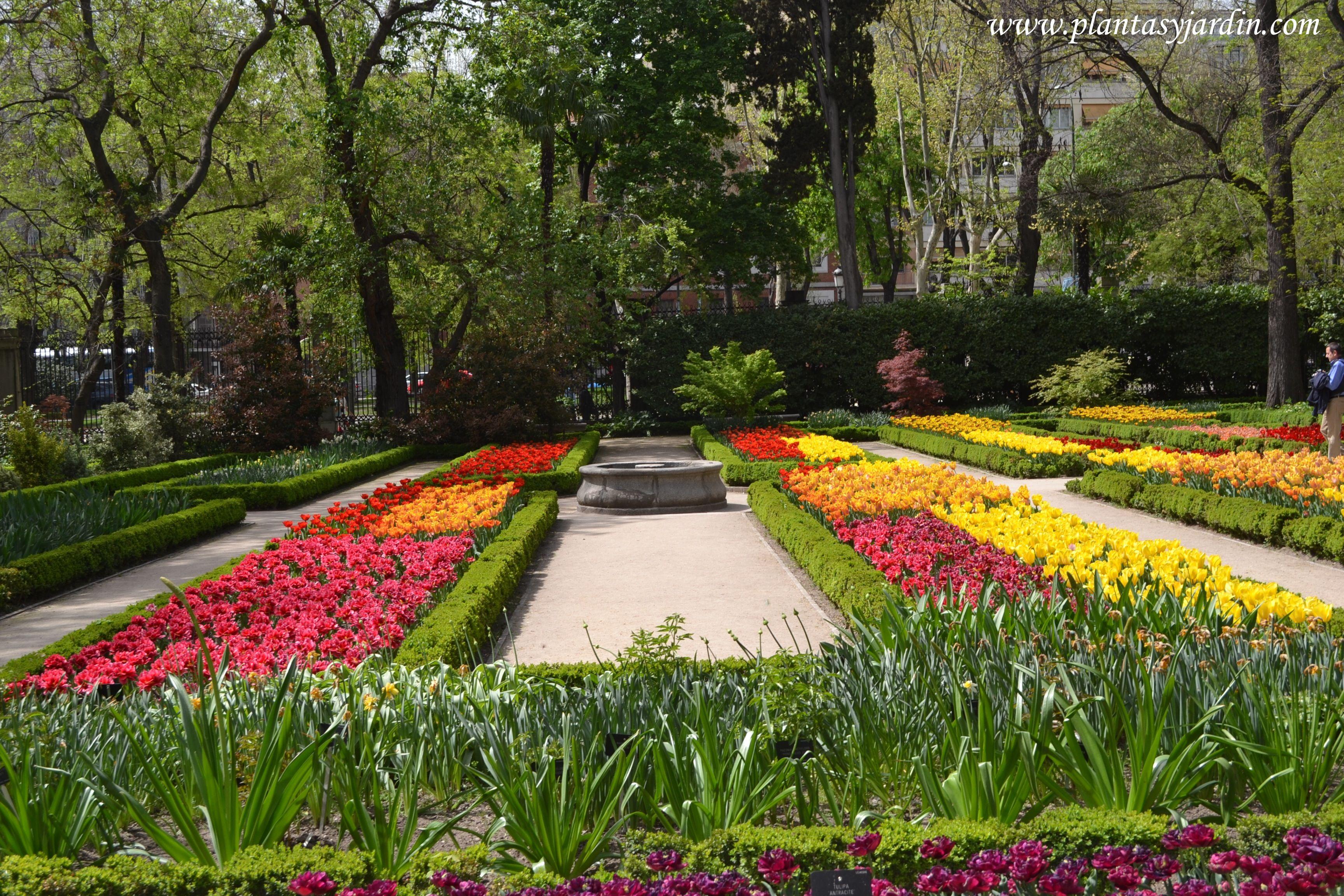 tulipanes variados en el real jard n bot nico de madrid en