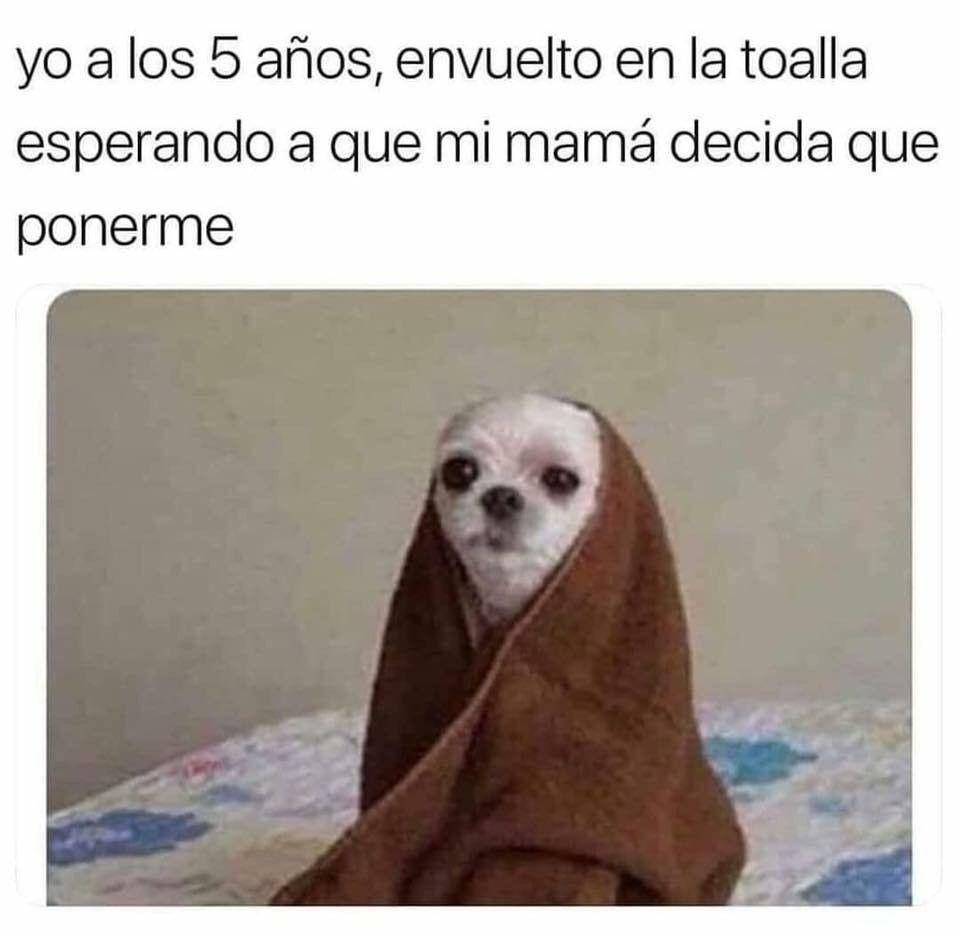 Pin De Flor M Romero R En Memes Chistes Para Ninos Graciosos Mascotas Memes Memes Divertidos