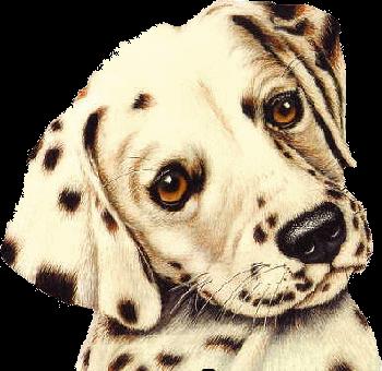 Hunde Dogs Canine Mit Bildern Hunde Gemalde Hund