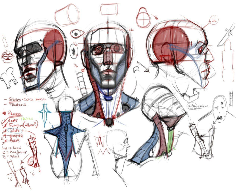 Сохранённые фотографии | 1 809 фотографий | Anatomy: head | Pinterest