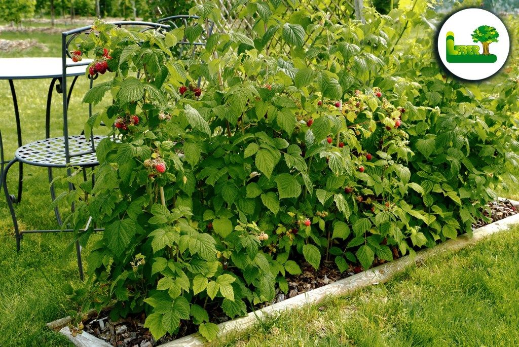 Naschgarten Anlegen Eigenes Obst Und Gemuse Garten Leber Blog Garten Gartengestaltung Garten Ideen