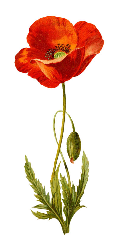 Pin On Flowers