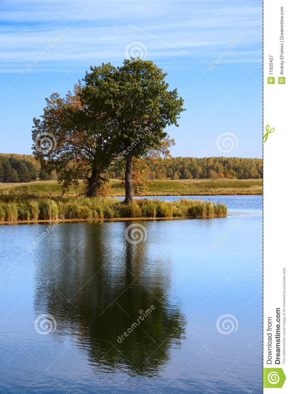 Árbol Del Otoño Reflejado En Agua. Reflejos en el agua