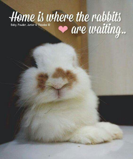 Very appropriate message for people that love bunnies ...