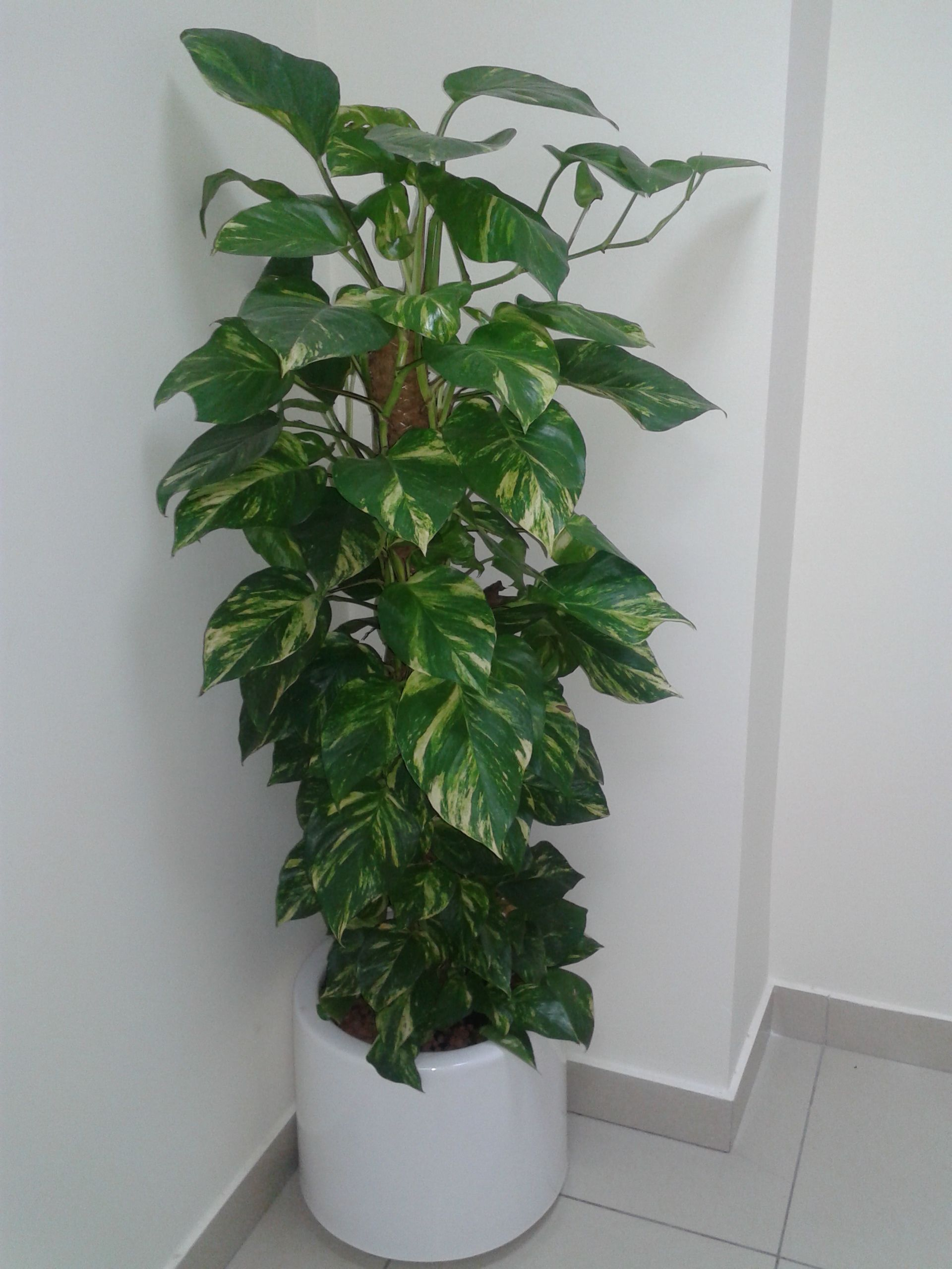 Pin by Stem and Leaves on Indoor Plants Dubai | Pinterest | Plants