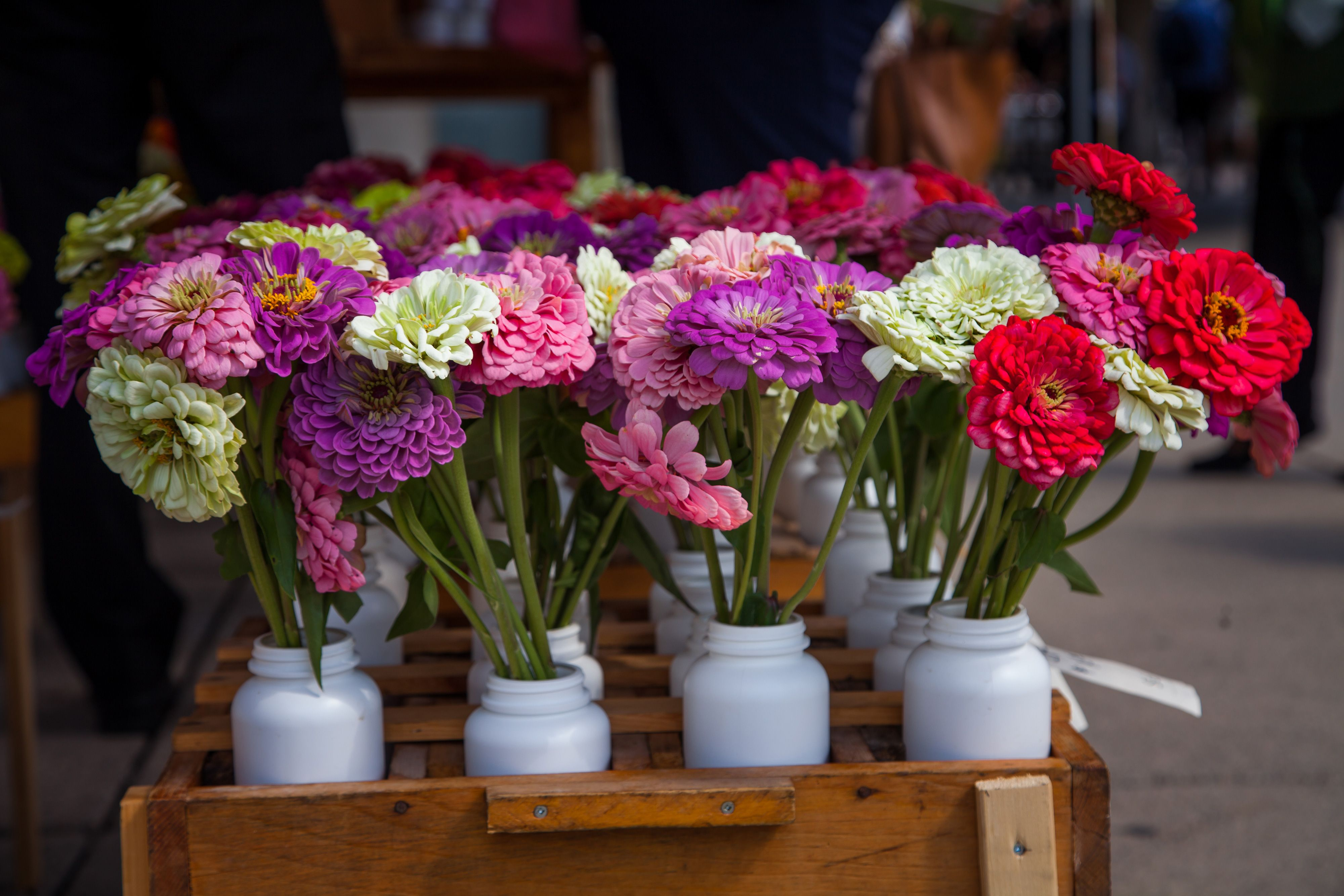 Farmers markets in toronto offma at nathan phillips