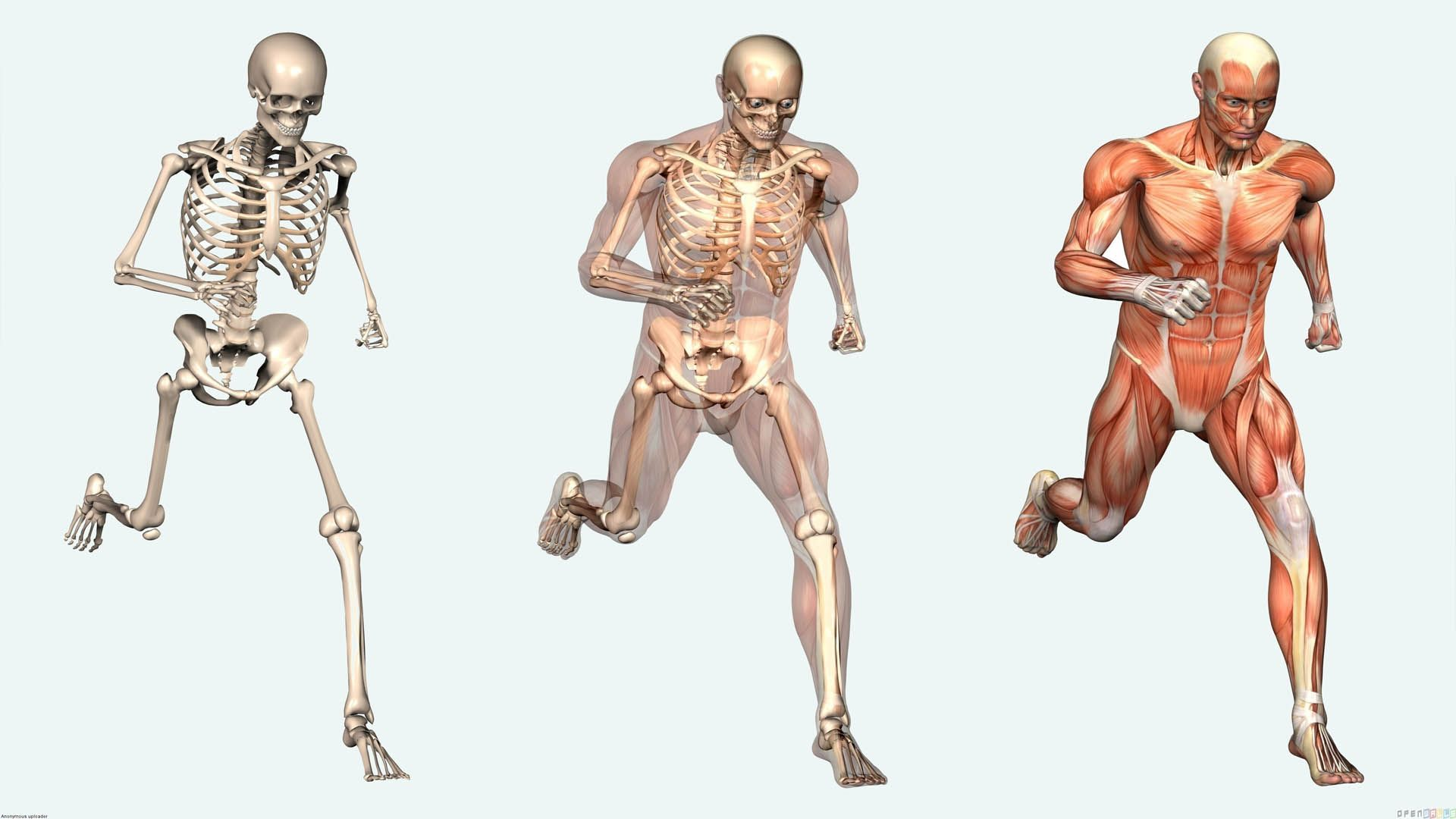 Learn about the human body http://www.keepingitkinky.net/resources/human-body/