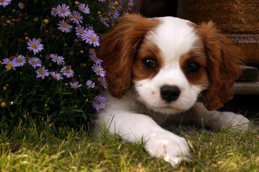 Dog Breeds For Depression 2 The Fit Me Pinterest Perros