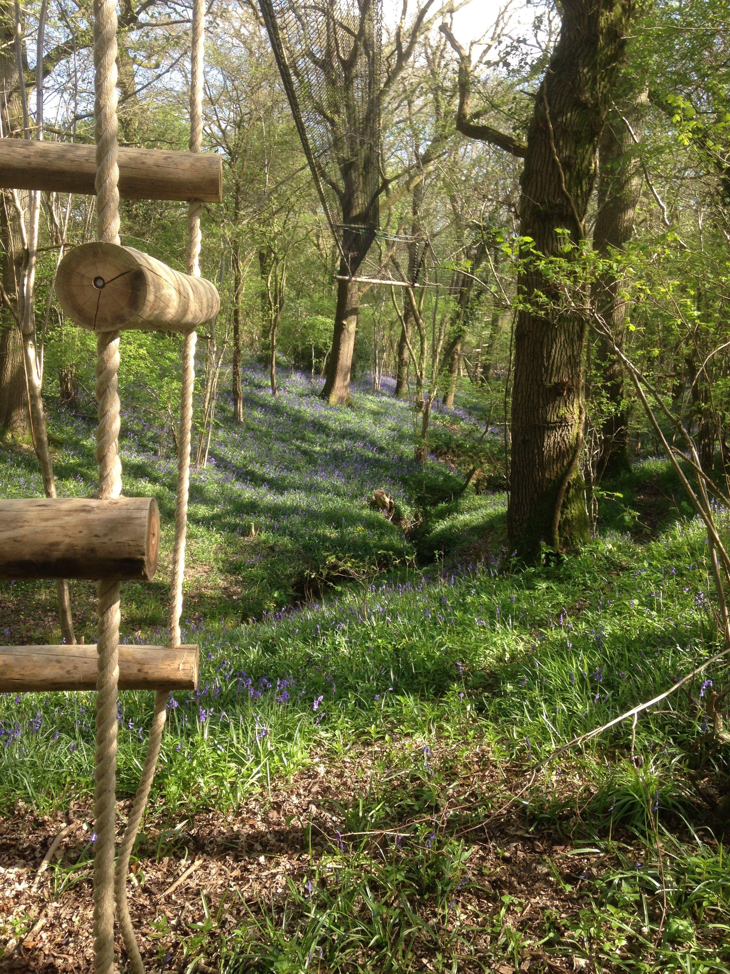 Rope ladder The adventure beginsa beautiful woodland