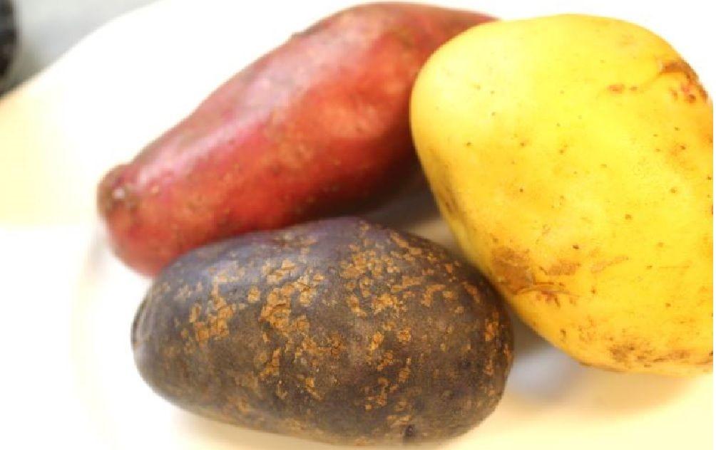 無農薬のジャガイモが、旬であります - waca-jhiのブログ