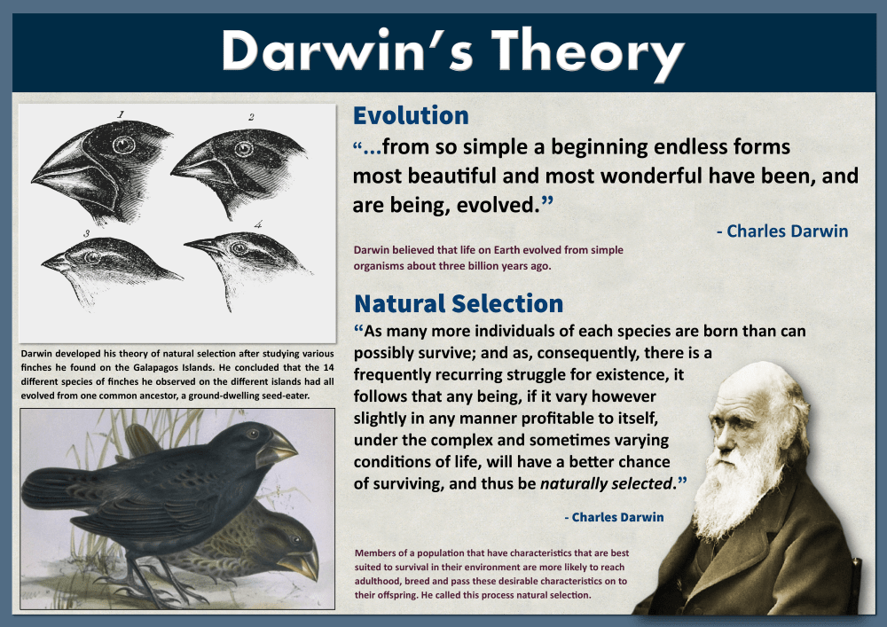 Darwin S Theory Of Evolution Darwin S Theory Of Evolution Theory Of Evolution Darwin Theory