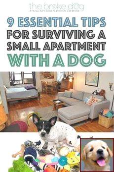 1 Have Dog Behavior Problems Learn About Dog Behavior Owner