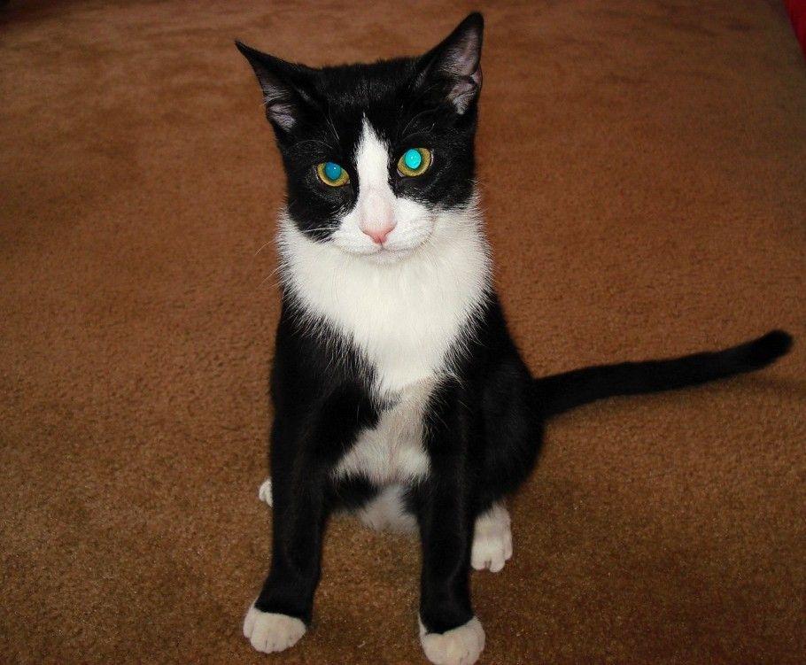 Tuxedo Cat Names Perfect Choice Cat Hug Cat Sitting Cats