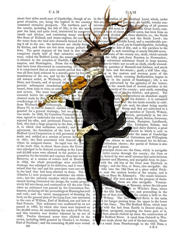 Dancing Deer With A Violin Fab Funky Illustrations Sur Toile