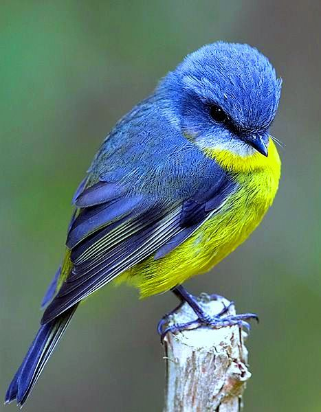 Pin De Tasha Cobb Em Animales Passaros Coloridos Passaros Bonitos Belas Criaturas