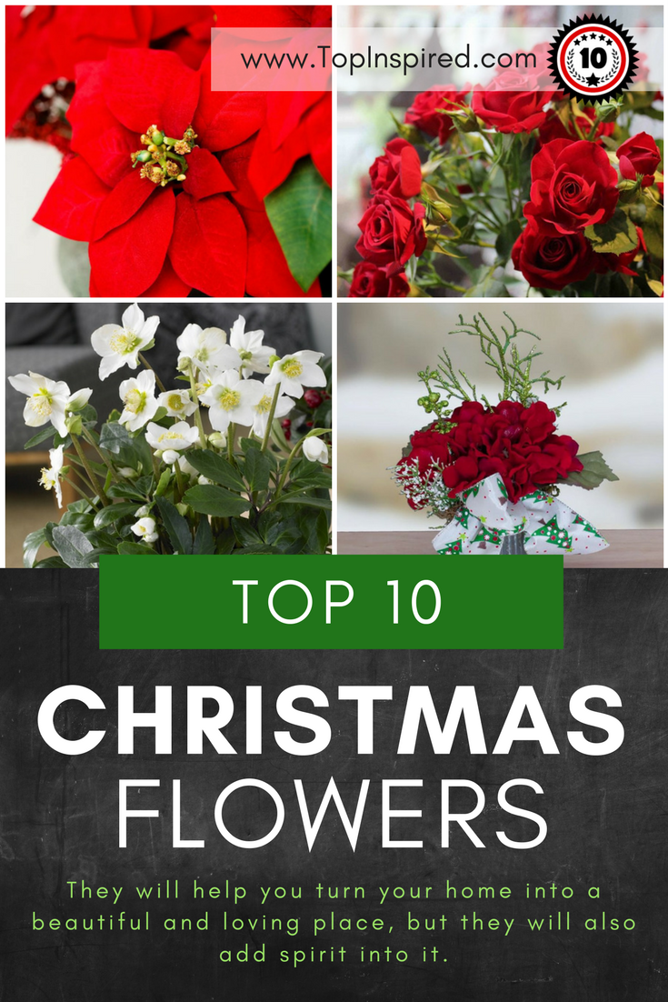 Top 10 Beautiful Flowers For The Best Christmas Spirit Christmas