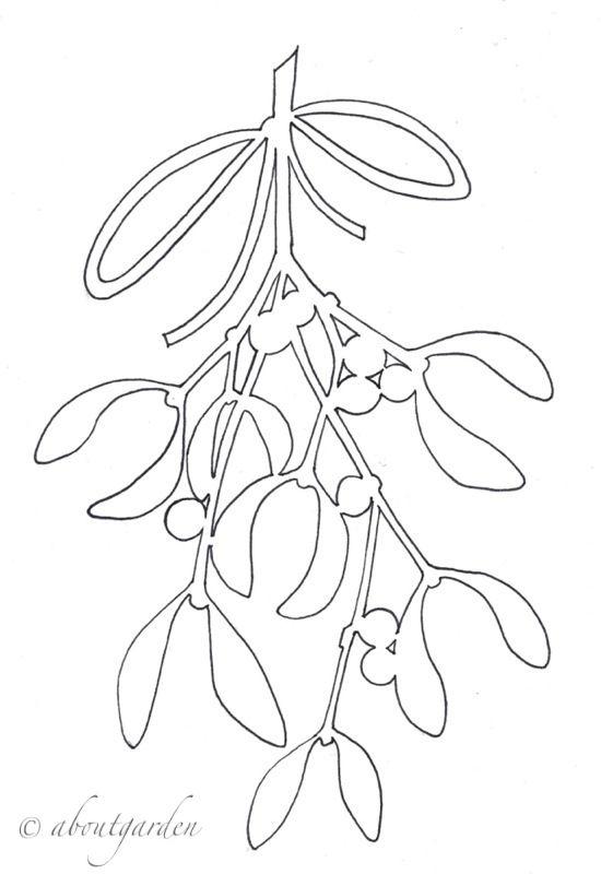 Vischio disegno fiori pinterest disegno natale e sagome - Agrifoglio immagini a colori ...