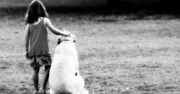 6 Sample Joint Custody Schedules Best Friends Labrador Puppies